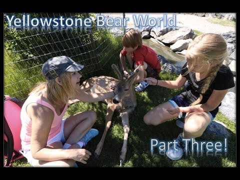 Petting Zoo!!  The best part of Yellowstone Bear World (Part 3)