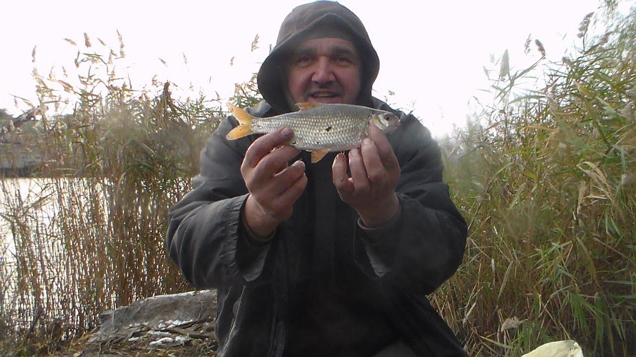 """Утро в """"Кривой"""", коты наелись , я остался рыбалкой доволен . г. Запорожье 23.11.20г."""