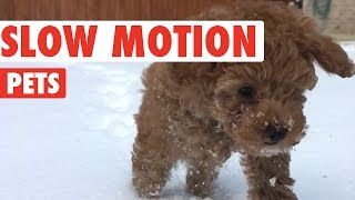 Amazing Slow Motion Pets Video Compilation 2016