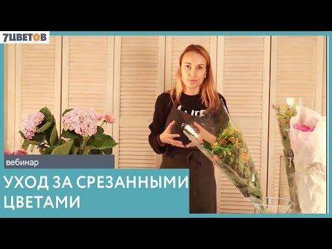 Интернет магазин цветовиз YouTube · Длительность: 8 мин28 с  · Просмотры: более 2.000 · отправлено: 20.11.2011 · кем отправлено: graddo.ru