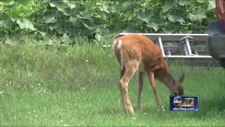 Deer Habitat Meetings