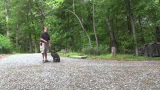 Sadie | German Shepherd Rescue Dog Training | Winston Salem Nc