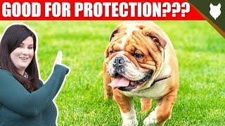 ARE ENGLISH BULLDOG GOOD GUARD DOGS?