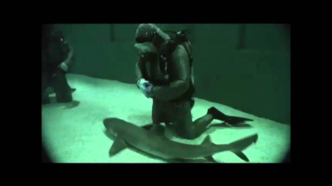 aims scuba team joe mike dive mandalay bay shark reef youtube