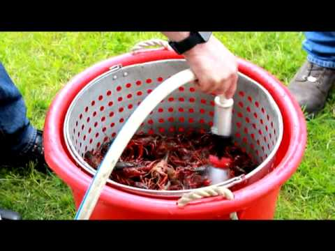 how to clean frozen crawfish
