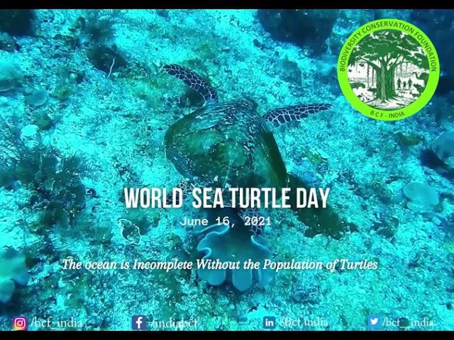 World Sea Turtle Day 2021