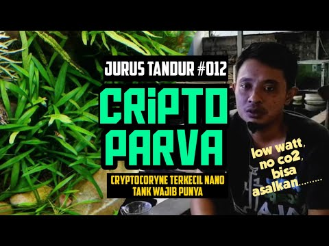 #JURUSTANDUR 012 ~ Cryptocoryne Parva, jenis kripto paling kecil cocok untuk aquascape mini