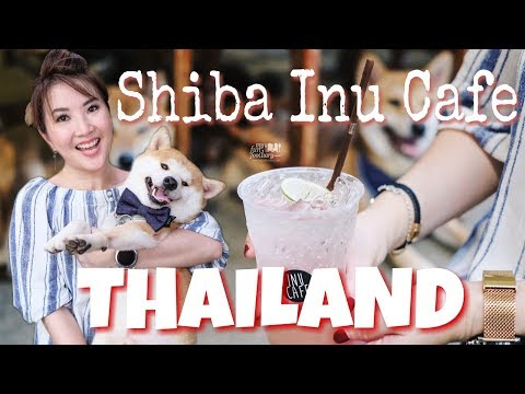 Shiba Inu Cafe for Dog Lovers in Thailand - Vlog Myfunfoodiary