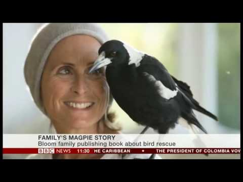 The magpie that saved a family