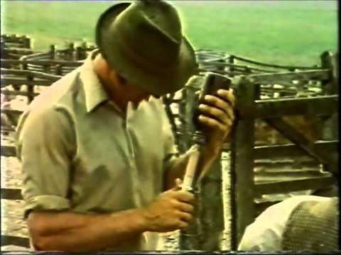 Shepherd (BBC 1976)