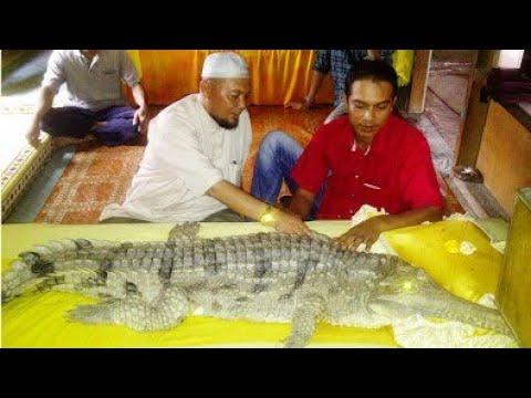 Kisah Anak Kembar Buaya di Jambi, Indonesia Part 1/2