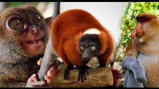 Самые необычные животные на земле часть 1 / The most unusual animals on Earth Part 1