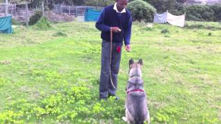 Underdog Sit Stay Training