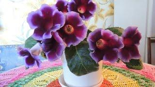 видео уход за домашними цветами