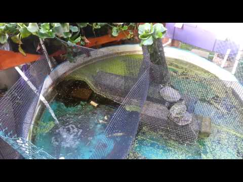 Simple aquaponic filter design simple free engine image for Self sustaining garden with fish