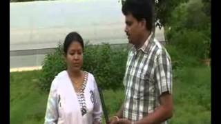 COMMERCIAL CULTIVATION OF TULSI