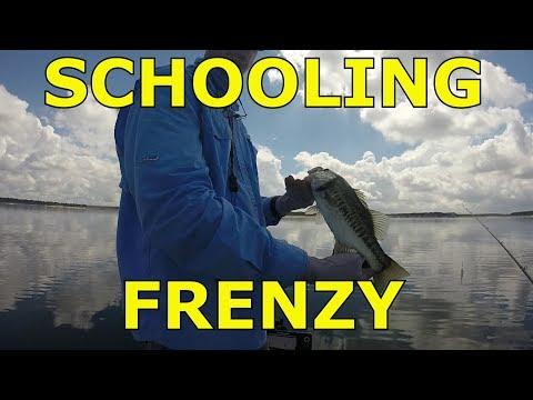 Schooling Feeding Frenzy Bass Fishing, Stillhouse Hollow September 2018