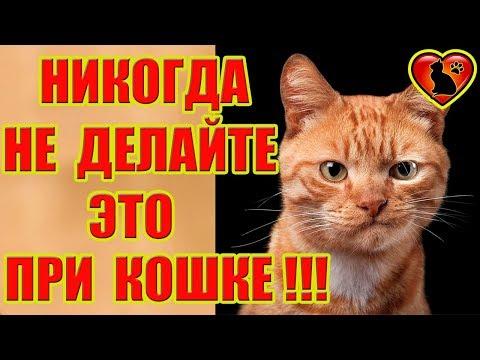 Что никогда нельзя делать в присутствии кошки?!