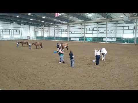 4-H Horse English Show at 2020 Lancaster County Super Fair