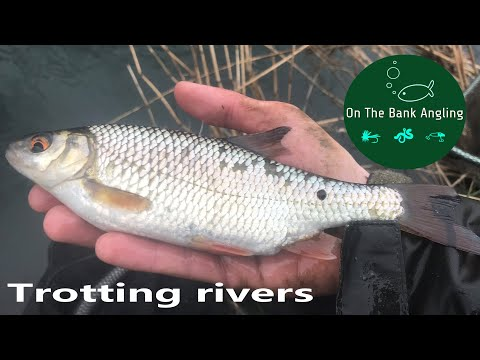 Small River Float Fishing With Maggots