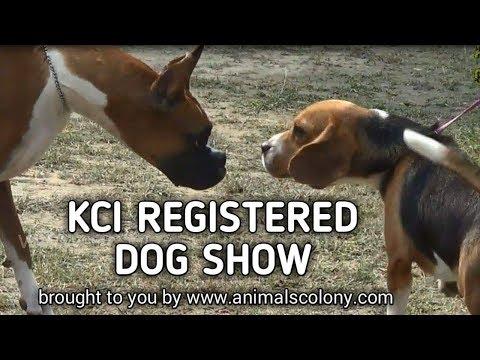 kci dog show in kolkata 2018 II part 1 II Animal Colony