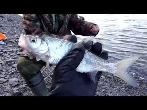 Рыбалка на резинку на Амуре