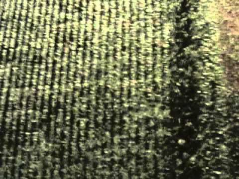 L 39 invasion des papillons de nuit version courte youtube - Invasion papillon de nuit ...