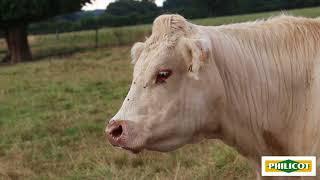 Pour votre élevage bovin viande