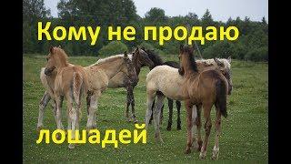 Кому я НЕ продаю своих лошадей.