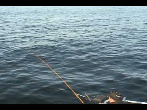 Awesome king salmon fishing in kodiak alaska youtube for Alaska out of state fishing license