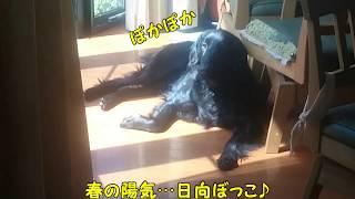 チャンネル登録よろしくお願いします!! Twitterはじめました! https:...
