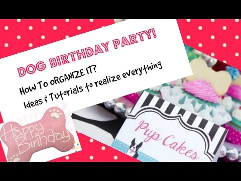 birthday-party-for-dog:-how-to-organize-the-party-for-your-dog
