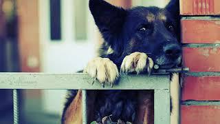 Хозяин не сдержал слез, когда увидел старого пса, который с тоской смотрел на пустующий дом...