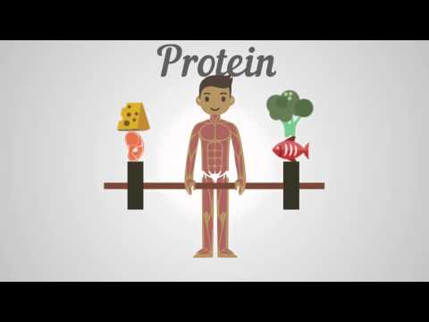 Biology Proteins, Carbohydrates & Fats