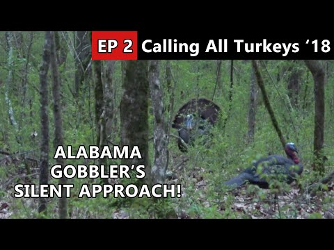 HE CAME IN SILENT! Public Land Turkey Hunting In Alabama - Calling All Turkeys