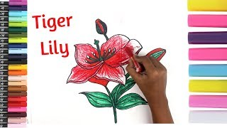 Draw a Tiger Lily | How To Draw A Flower | Art colors and music for kids