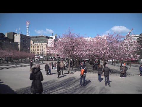 AFP: Coronavirus: à Stockholm, les fleurs prennent le pas sur la peur | AFP