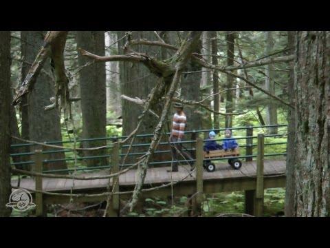 Hemlock Grove Boardwalk: A Barrier-Free Experience in Glacier National Park