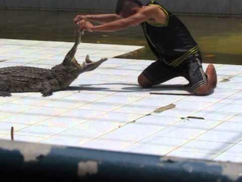 Шоу крокодилов на ост.Самуи