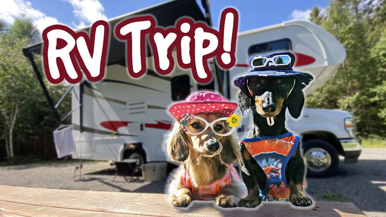 Download The Dogs Go On a RV CAMPING TRIP!