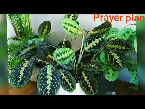 Best Small Indoor Plants In India For Decoration Plant Decoration