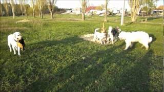 Прогулка собак п.Матырский