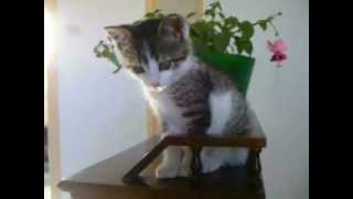 Immense moment de tendresse avec mon chaton thumbnail