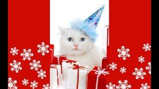 влог - день белых котов и новогодних игрушек))