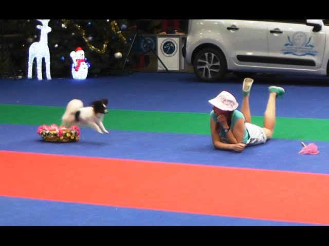 "Танцы с собаками. Чемпионат РКФ - 2014. RKF Championship  ""Dancing with dogs""."
