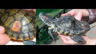 УФ лампа для черепах(рептилий)