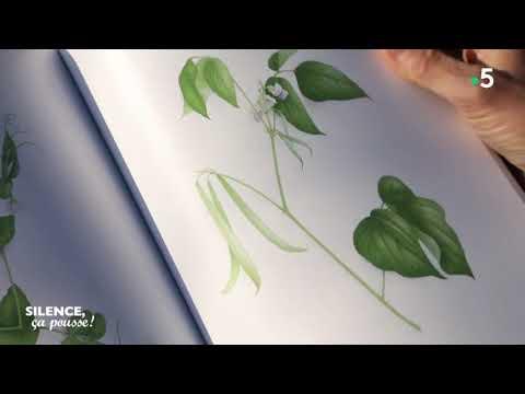 Aquarelle Botanique Dans L Atelier De Vincent Jeannerot Youtube