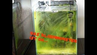 der andere tipp gegen algen im aquarium zoo petersen informiert. Black Bedroom Furniture Sets. Home Design Ideas