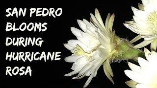 San Pedro Flowers & Hurricane Rosa