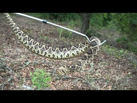 Eastern Diamondback Hunt